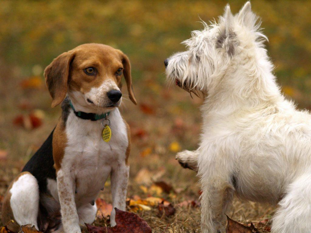 Dogs socialize